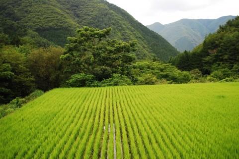 田んぼと畑