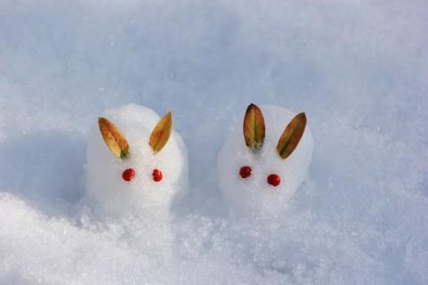 雪のウサギ
