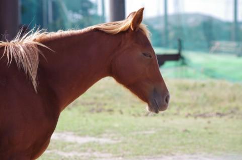 馬の鼻向け