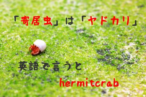 読めたらすごい漢字2⇒「寄居虫」